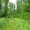 269_Lefthand Fork Woodlands (13)_large
