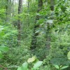 269_Lefthand Fork Woodlands (14)_large