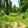269_Lefthand Fork Woodlands (15)_large