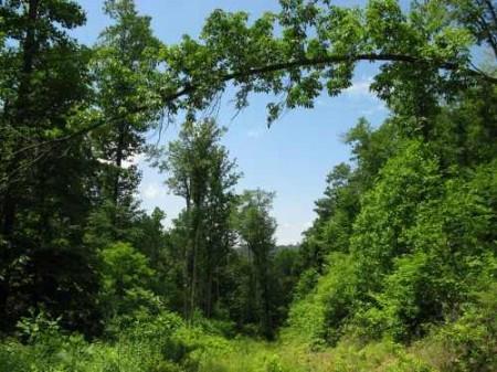 269_Lefthand Fork Woodlands (16)_large