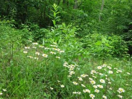 269_Lefthand Fork Woodlands (3)_large