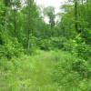 269_Lefthand Fork Woodlands (4)_large