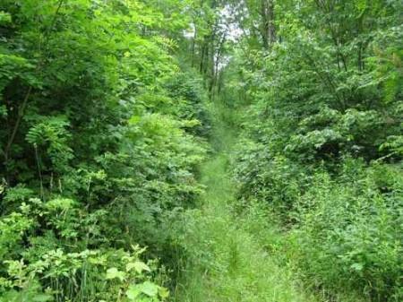 269_Lefthand Fork Woodlands (5)_large