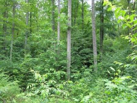 269_Lefthand Fork Woodlands (6)_large