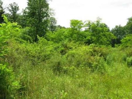 269_Lefthand Fork Woodlands (7)_large