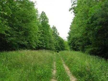 269_Lefthand Fork Woodlands (8)_large