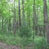 269_Lefthand Fork Woodlands (9)_large