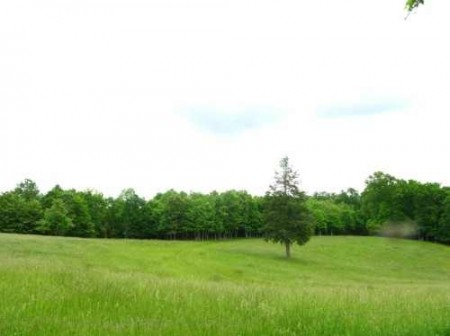 281_Orchard Hill Farm - Resize 31_large 18