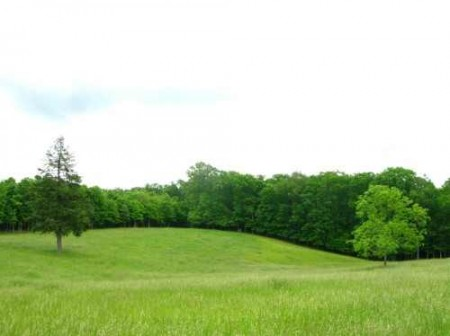 281_Orchard Hill Farm - Resize 36_large 19