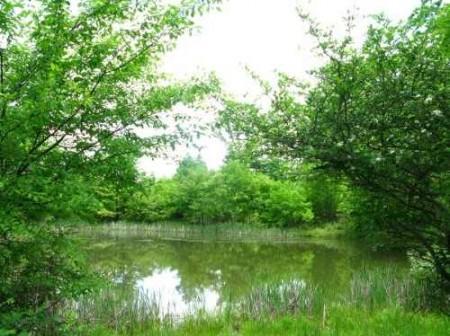 282_Jackson Lake & Farm (12)_large
