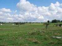 AUCTION: LEWISBURG FARM - 150 +/- ACRES
