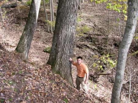 305_Oldgrowth timber_large 8