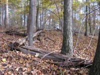 RED SPRINGS FOREST - 279 ACRES +/- Summers County, WV