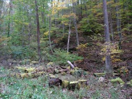 305_wildlife foodplot  at timber harvest landing site_large 6