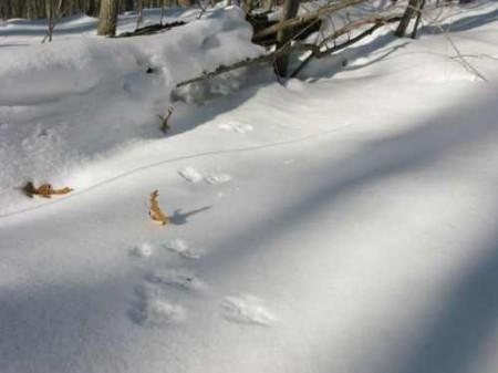 306_Clemons - Rabbit Tracks_large 16
