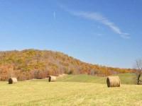 GRASSY MEADOWS FARM - 33 +/- ACRES