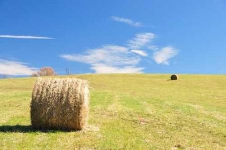 307_Grassy Meadows Farm - Hay Bales 5