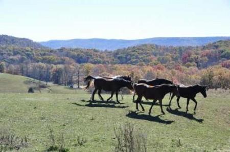 307_Grassy Meadows Farm - Tour 17