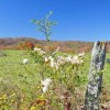 307_Grassy Meadows Farm - Tour 37