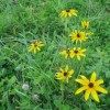 307_Workman - Grassy Meadows 10
