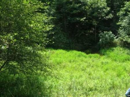 307_Workman - Grassy Meadows 11