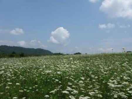 307_Workman - Grassy Meadows 2