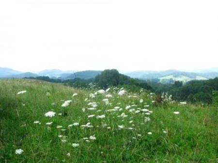 307_Workman - Grassy Meadows 9
