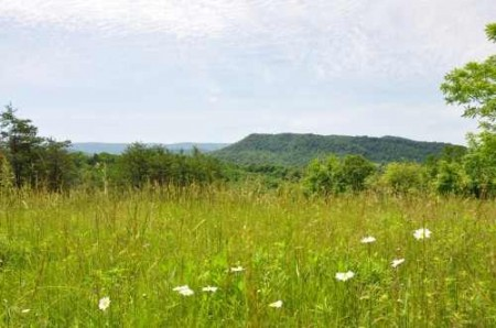 336_High Meadows 08_large
