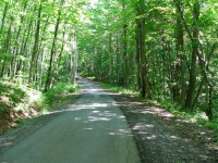 LIVELY BRANCH FOREST - 30.64 ACRES