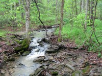 COOKS RUN FOREST - 37 +/- ACRES