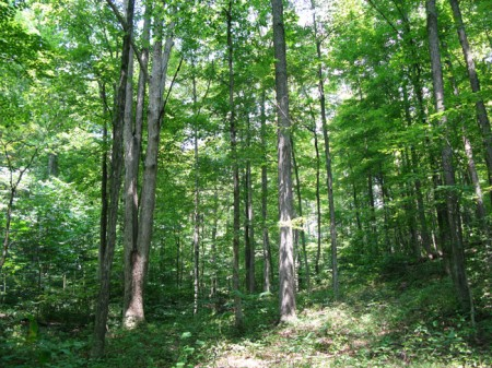 Feedtrough Run 63 Acres (16)