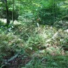 Feedtrough Run 63 Acres (17)