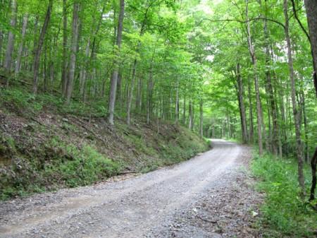 Feedtrough Run 63 Acres (19)