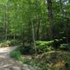Feedtrough Run 63 Acres (23)