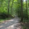 Feedtrough Run 63 Acres (24)