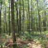 Feedtrough Run 63 Acres (29)