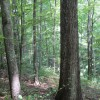 Feedtrough Run 63 Acres (3)