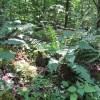 Feedtrough Run 63 Acres (5)