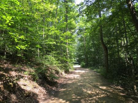 Feedtrough Run 63 Acres (7)