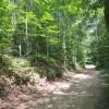 Feedtrough Run 63 Acres (8)