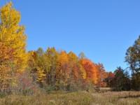 MITCHELL RIDGE FOREST - 236 ACRES +/-