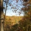 Mitchell Ridge Forest Tour 02