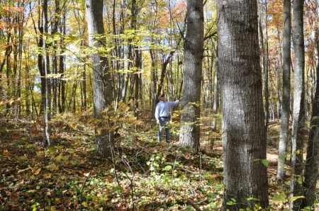 Mitchell Ridge Forest Tour 03