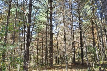 Mitchell Ridge Forest Tour 05