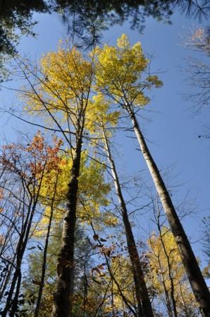 Mitchell Ridge Forest Tour 06
