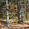 Mitchell Ridge Forest Tour 10