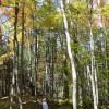 Mitchell Ridge Forest Tour 11