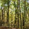 Mitchell Ridge Forest Tour 12