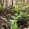 Mitchell Ridge Forest Tour 13