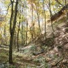 Mitchell Ridge Forest Tour 14